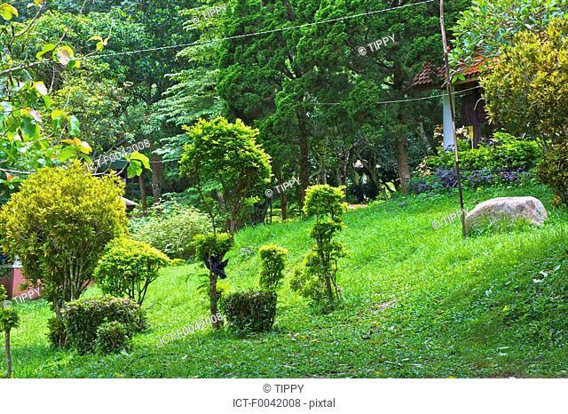 Thailand, Chiang Mai, wat phrathat doi suthep, garden