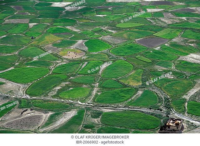 Green fields or plots with irrigation channels, Tongde, Zanskar, Ladakh, Jammu and Kashmir, North India, India, Himalayas, Asia
