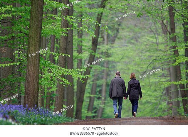 Atlantic bluebell (Hyacinthoides non-scripta, Endymion non-scriptus, Scilla non-scripta), Walkers in a forest with bluebells, Belgium, Hallerbos