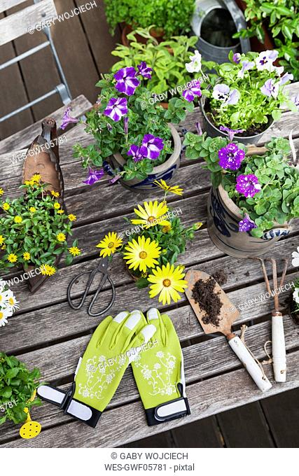 Different summer flowers and gardening tools on garden table