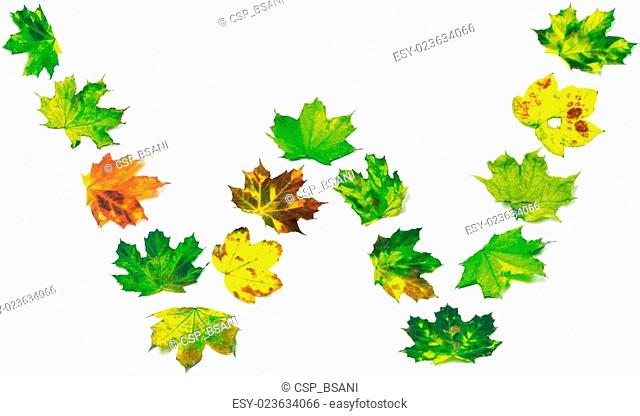 Letter W composed of multicolor maple leafs