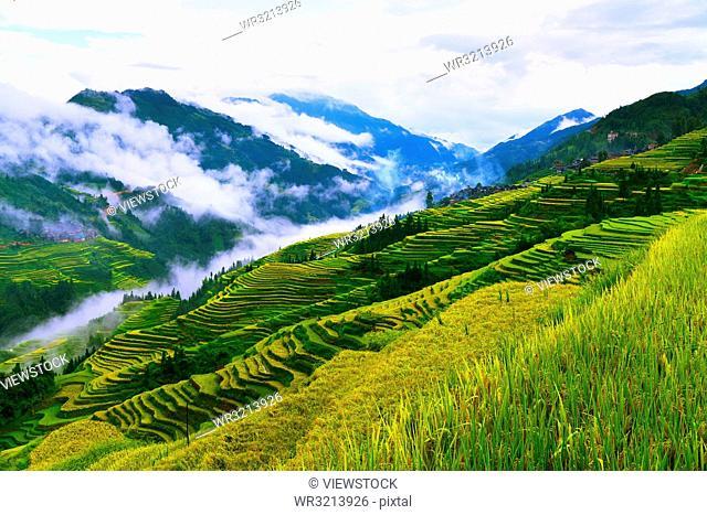 Guangxi terraced landscape