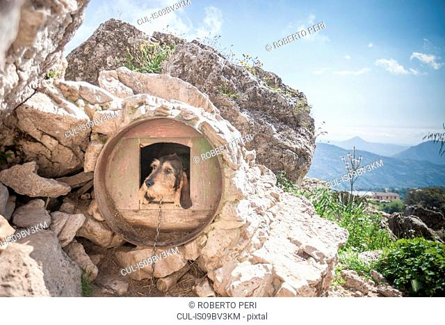 Dog looking out from circular dog kennel in rural rock, Nuoro, Sardinia, Italy
