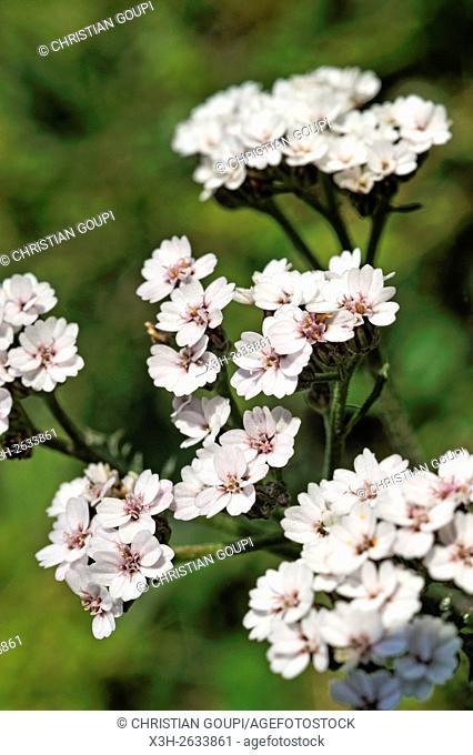 wild flowers in garden