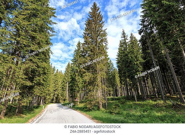 Forest of Triglav national park inside Bohinj valley near Bled in Julian Alps, Slovenia, Europe