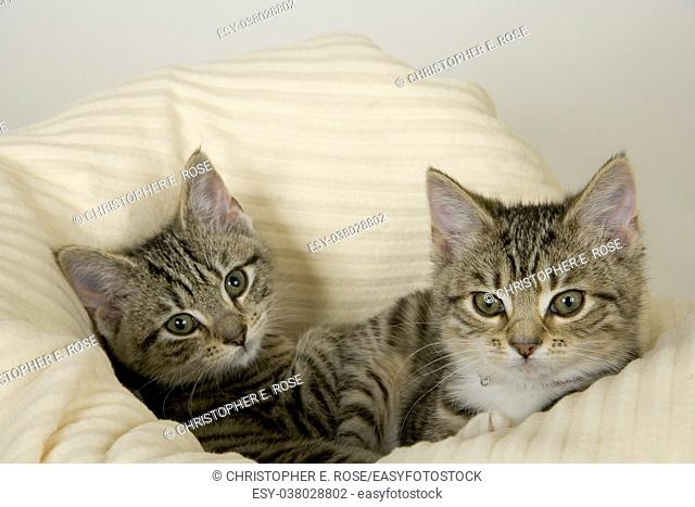 Two cute young kittens in a bed on a white background