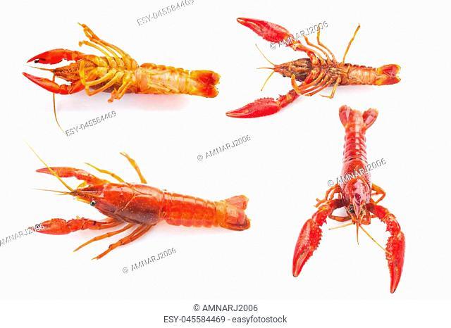 fresh crayfish on white background