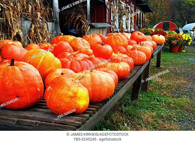 Pumpkins are displayed at a roadside farm