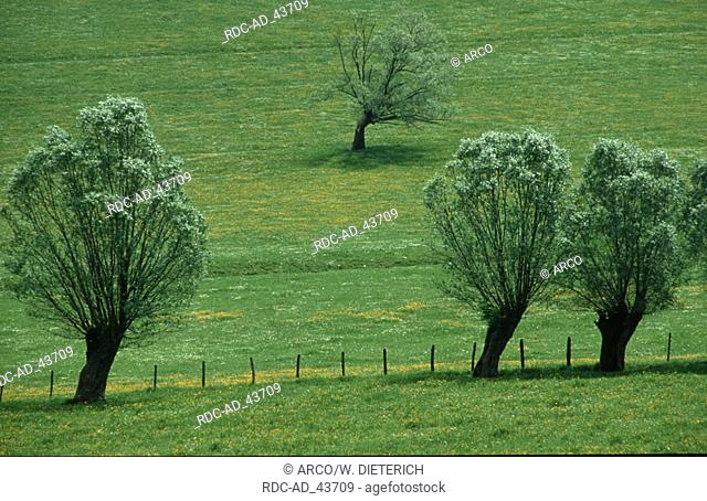 Trees and pasture in spring Cormatin Burgundy France