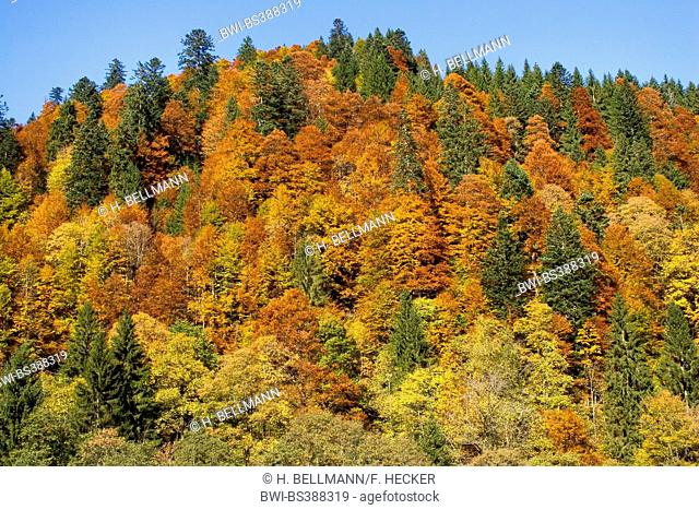 mountain forest at the Hinterstein Valley in autumn, Germany, Bavaria, Allgaeu