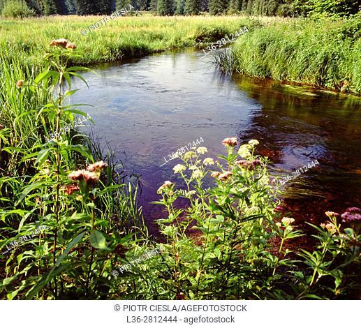 Poland. Suwalski region. Marycha river