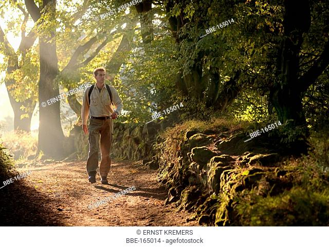 Hiker on a forest path in the morning light