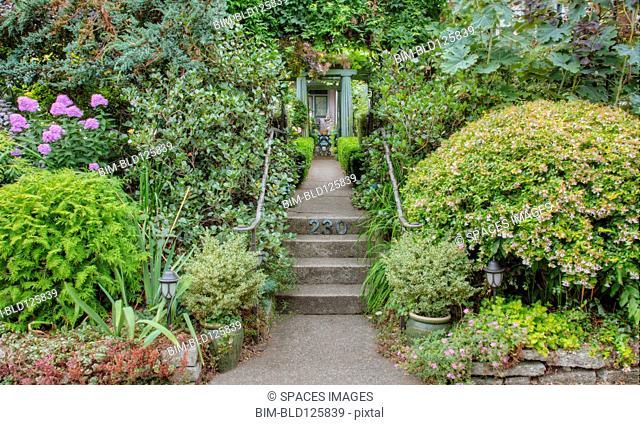 Steps in lush garden