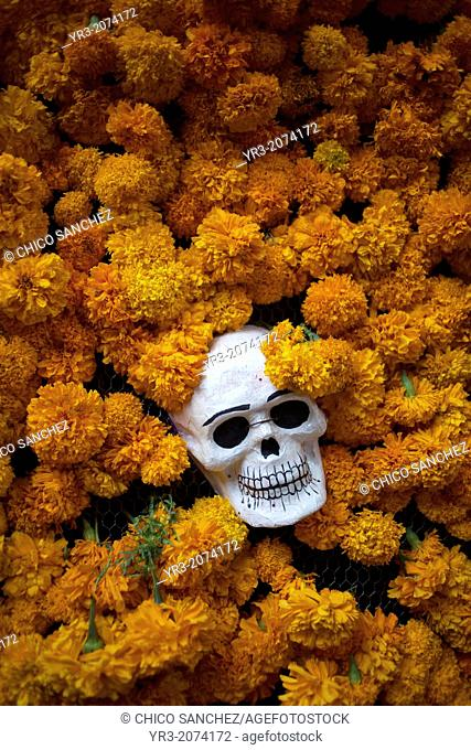 A skull surrounded by marigold flowers is displayed in Los Danzantes restaurant during the Day of the Dead celebrations in Oaxaca, Mexico