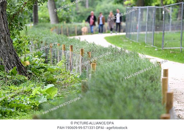 08 June 2019, Hessen, Frankfurt/Main: Walkers pass a newly erected fence in Frankfurt's Ostpark. In order to keep the annoying wild geese away from the...