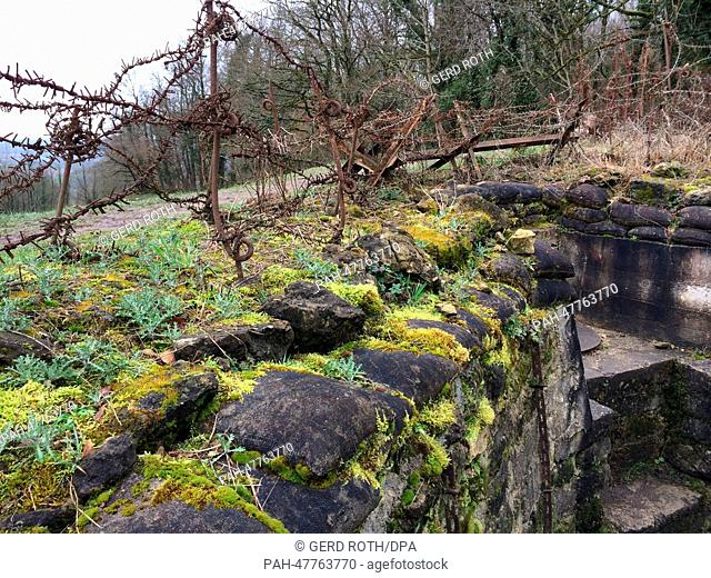 A view of the overgrown trenches and the remains of the village of Vauquois which was destroyed in World War I near Verdun, France, 20 February 2014