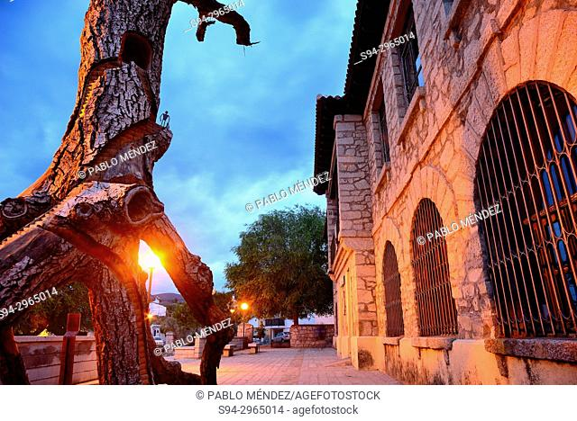 Artistic tree carving in Old Schools of Bustarviejo, Madrid, Spain