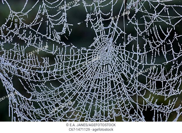 Spiders Web in frost on wire fence