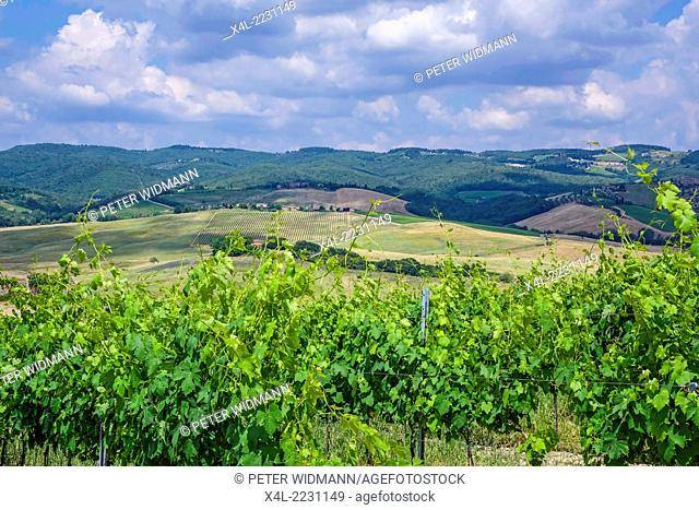 Typical landscape with vineyards in Tuscany, Italy, Europe
