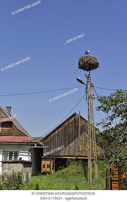 nid de cigogne a Debno, Comte de Nowy Targ, Province Malopolska (Petite Pologne), Pologne, Europe Centrale/white stork nest at Debno, Nowy Targ County