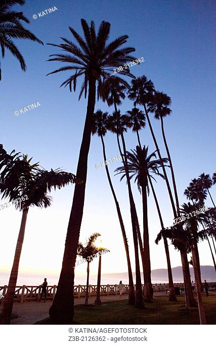 Sunset and silhouetted palm trees at Palisades Park, Santa Monica, City of Los Angeles, California, USA