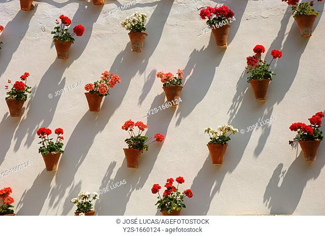 Zoco, Flowerpots in typical courtyard, Cordoba, Region of Andalusia, Spain, Europe