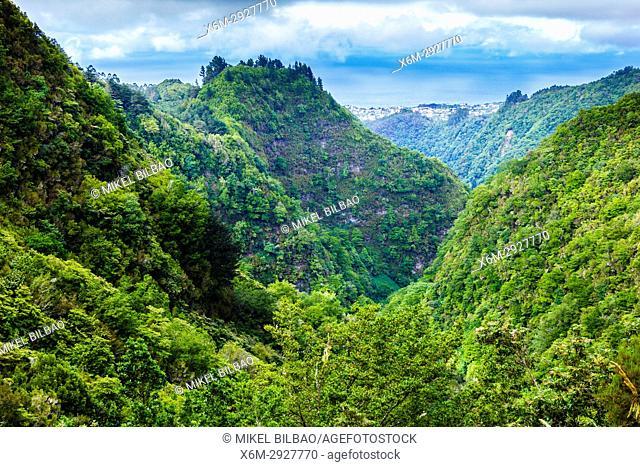 Laurisilva or laurel forest. Levada de Caldeirao Verde. Santana. Madeira. Portugal, Europe