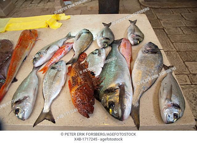 Local fish from the Adriatic sea in seafood market Grad the old town Split city Dalmatian coast Croatia Europe