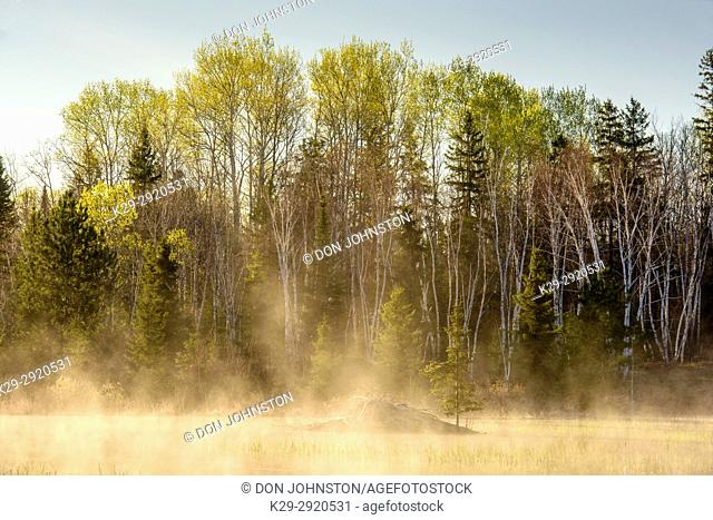 Spring beaver pond with rising mists, at dawn, Greater Sudbury, Ontario, Canada
