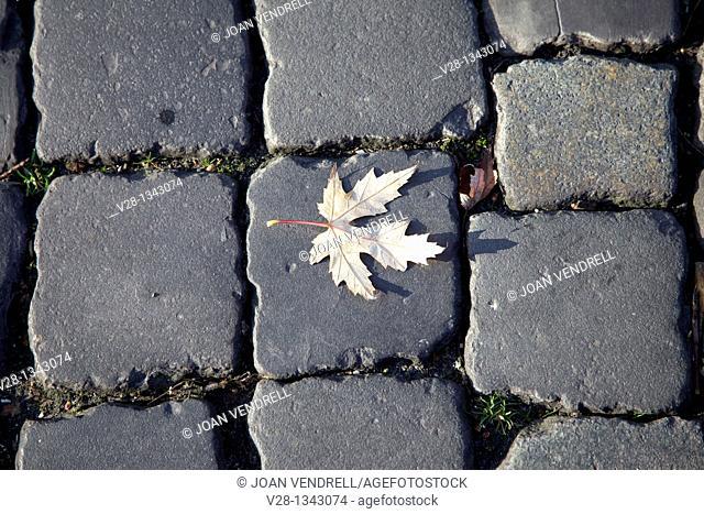 Leaf on the sidewalk