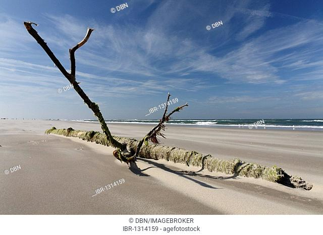 Flotsam, moss-covered dead wood, Texel, The Netherlands, The Netherlands, Europe