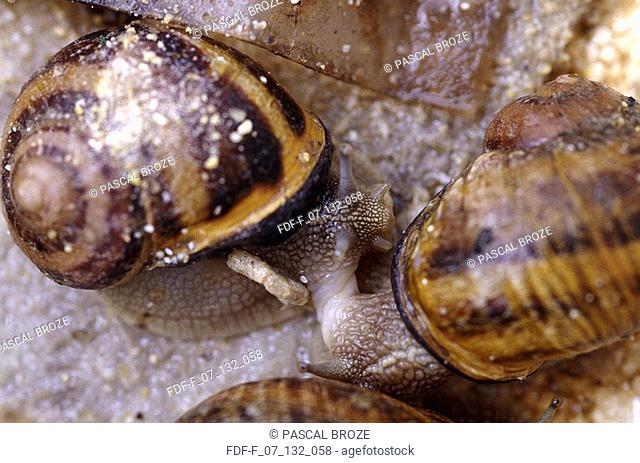Close-up of two snails