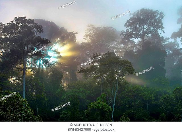 Sunrise in the foggy rainforest of Tabin, Malaysia, Borneo, Sabah