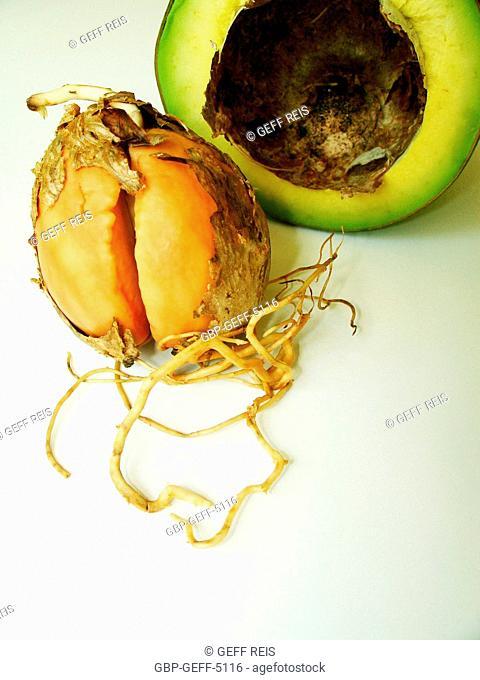 Avocado Seed, São Paulo, Brazil