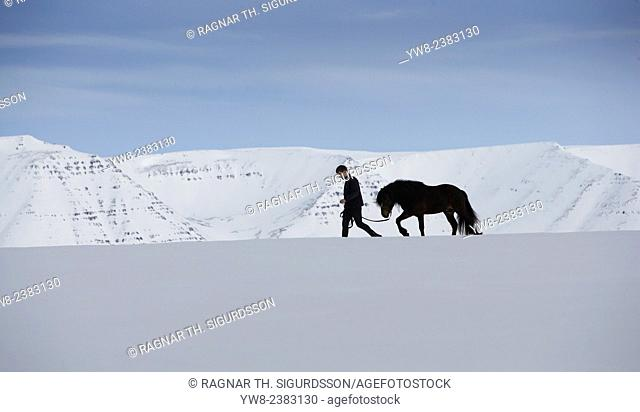 Icelandic Horse with trainer wintertime, Iceland