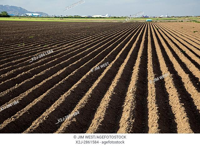 Marana, Arizona - Farm land in the Sonoran Desert near the Pinal Airpark