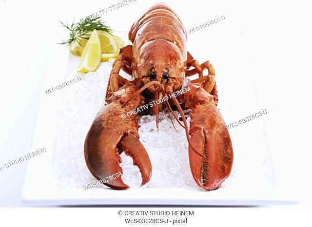 Lobster on ice with slices of lemon