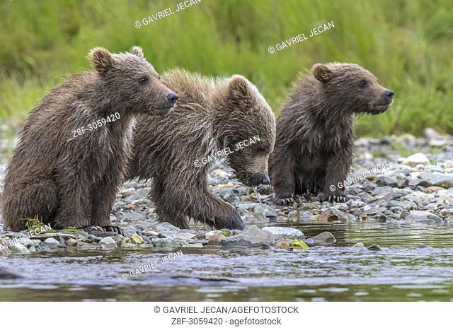 Wild landscapes and wildlife. Katmai National Park, Alaska, USA