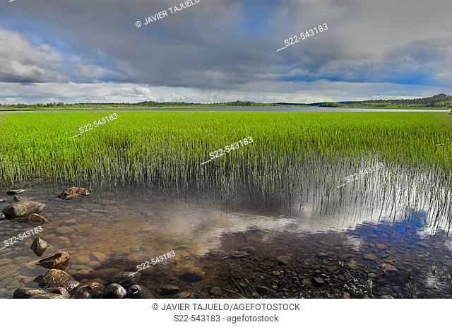Wetland. Ovre Pasvik Natural Park, Norway
