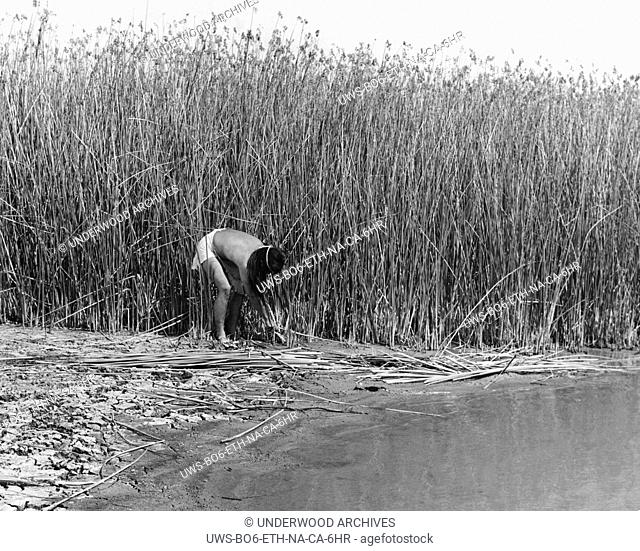California: c. 1930.The California Indians used the materials about them to build their houses. The Yokut tribes and several others cut the tules bulrushes that...