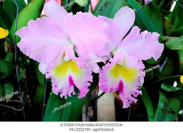 Orchid of tropical
