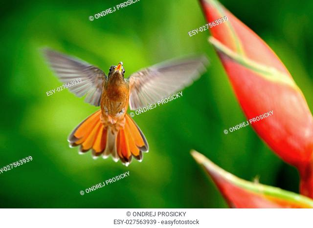 Flying hummingbird with flower