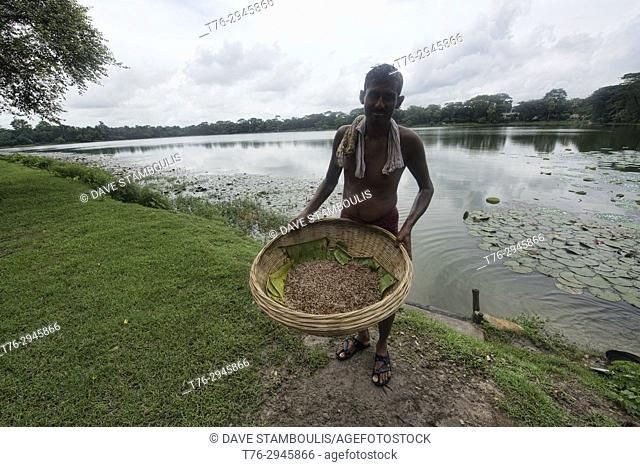 Man and his mung beans at the lotus pond at Shait Gumbad Mosque, Bagerhat, Bangladesh
