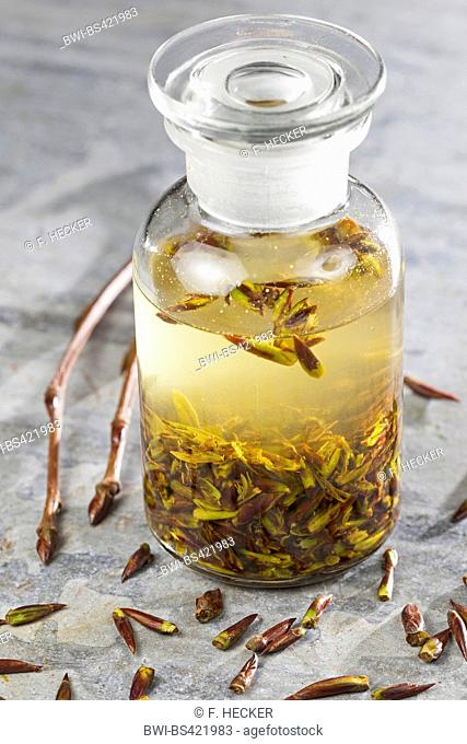 balsam poplar (Populus spec.), balsam poplar-tincture, alcoholic essence from buds, Germany