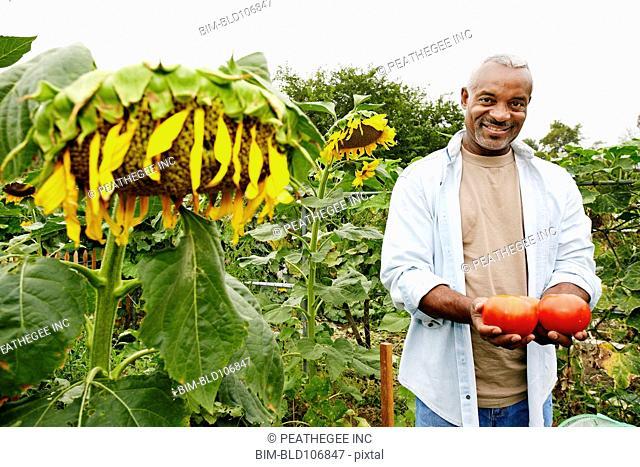 Black man holding tomatoes in community garden