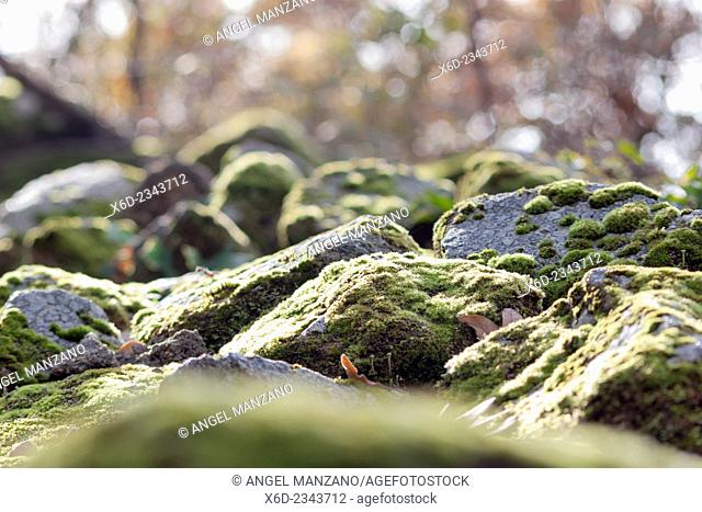 Moss rock close up, La Vera region