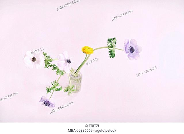 Flowers, vase, ranunculus, anemones