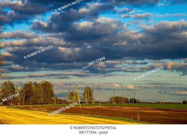 Green field with cereal and trees on the back, against a blue cloudy sky. Spring landscape with cornfield, wood and cloudy blue sky