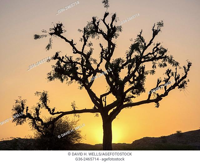 Silhouette of tree in  Chhatrasagar, Rajasthan, India