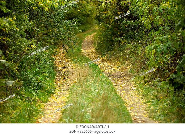 Country road through rich deciduous forest in overcast weather, autumn scene